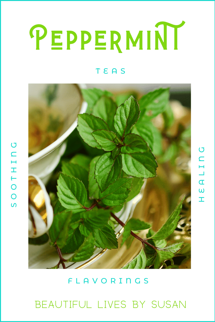Peppermint Plants and Essential Oils