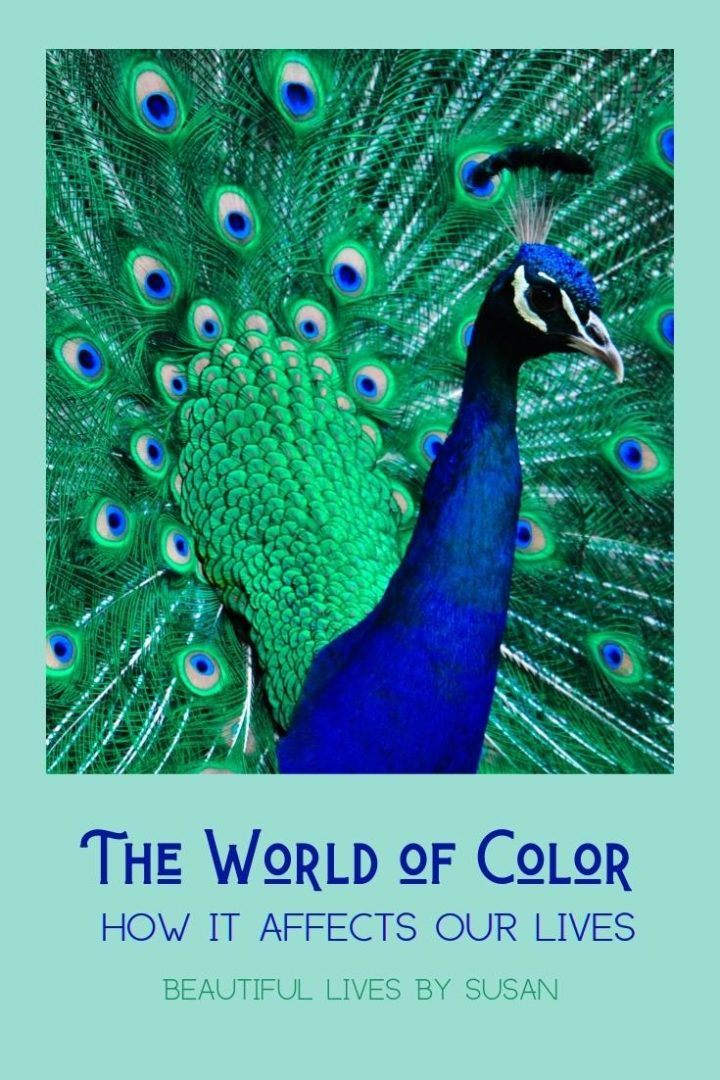 Color • How It Affects Our Lives