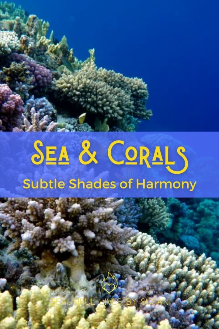 Sea and Corals Subtle Shades of Harmony - video of under the sea with gorgeous corals and salt water fish of multi colors.
