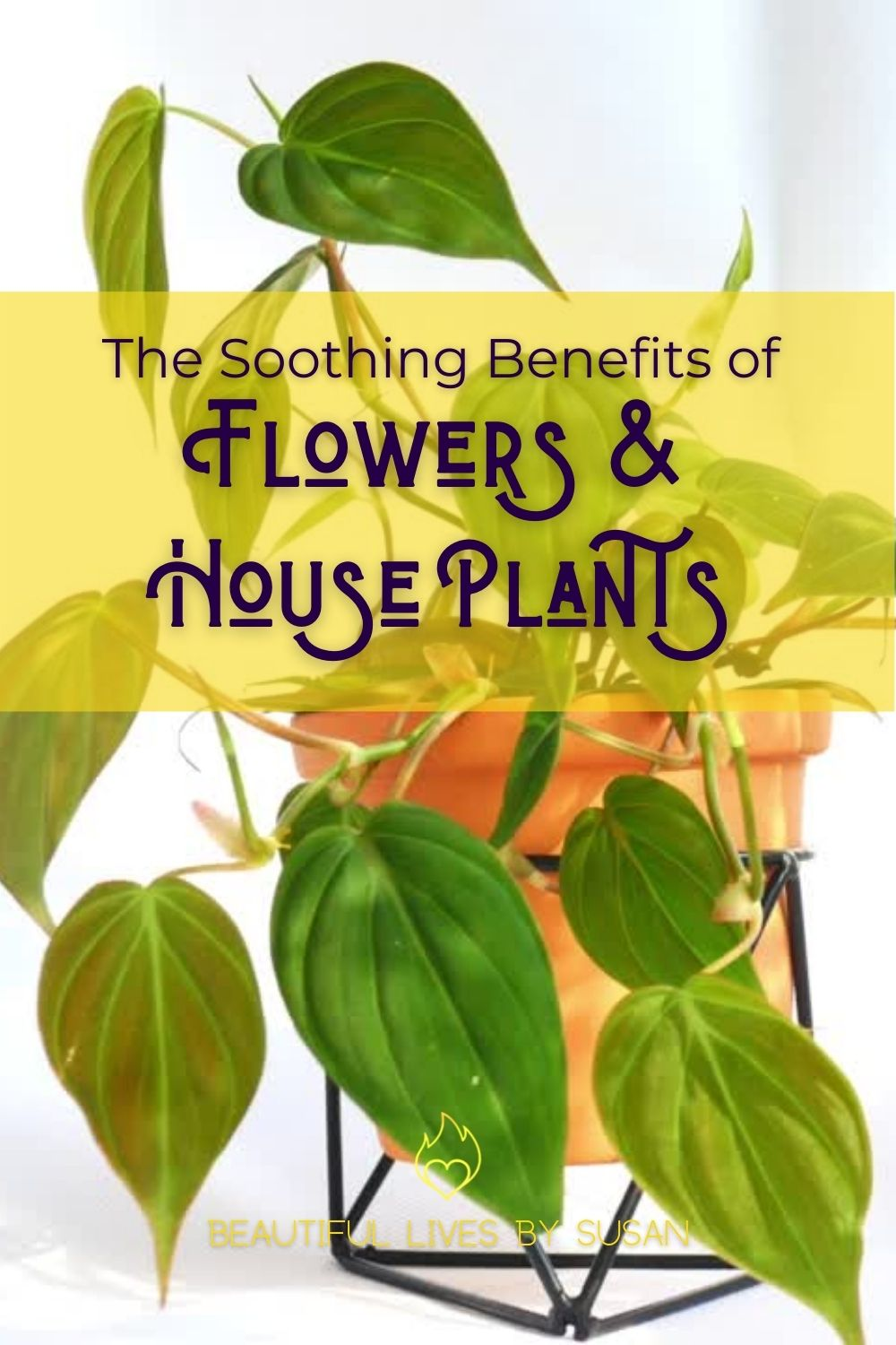 The Soothing Benefits of Flowers and House Plants video with Heart Leaf Philodendron, Chrysanthemum Flowers, and Gerbera Daisy Flowers.
