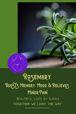Rosemary-Boosts-Memory-Mood-Relieves-Minor-Pain