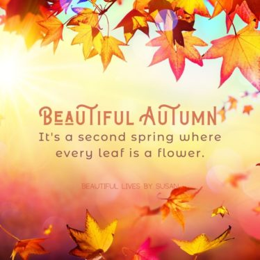 Beautiful Autumn! It's a second spring where every leaf is a flower.