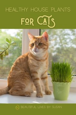 Healthy House Plants for Cats