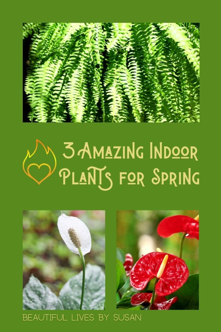 3 Amazing Indoor Plants for Spring