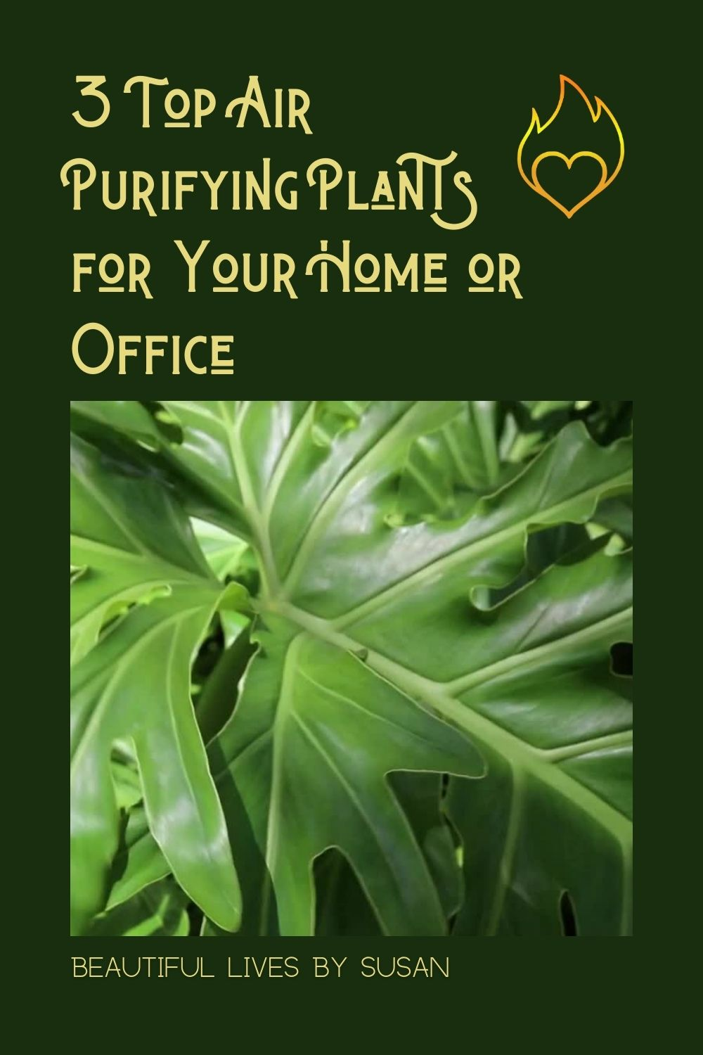 3 Top Air Purifying Plants for Your Home or Office