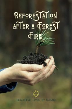 Reforestation after a Forest Fire