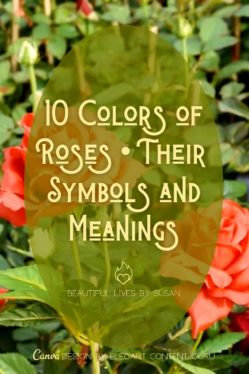 Pinterest 10 Colors of Roses • Their Symbols and Meanings